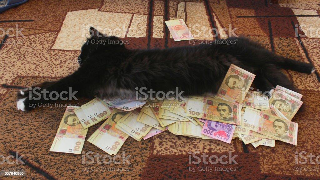 black cat lying on the carpet with Ukrainian money stock photo
