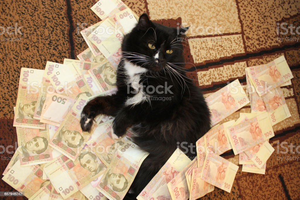 black cat lying on the Ukrainian money stock photo
