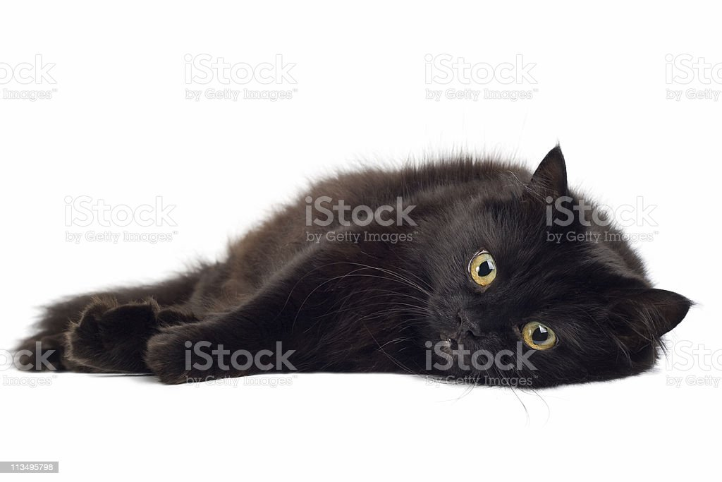 black cat lying on white royalty-free stock photo