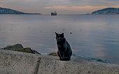 Black cat near sea