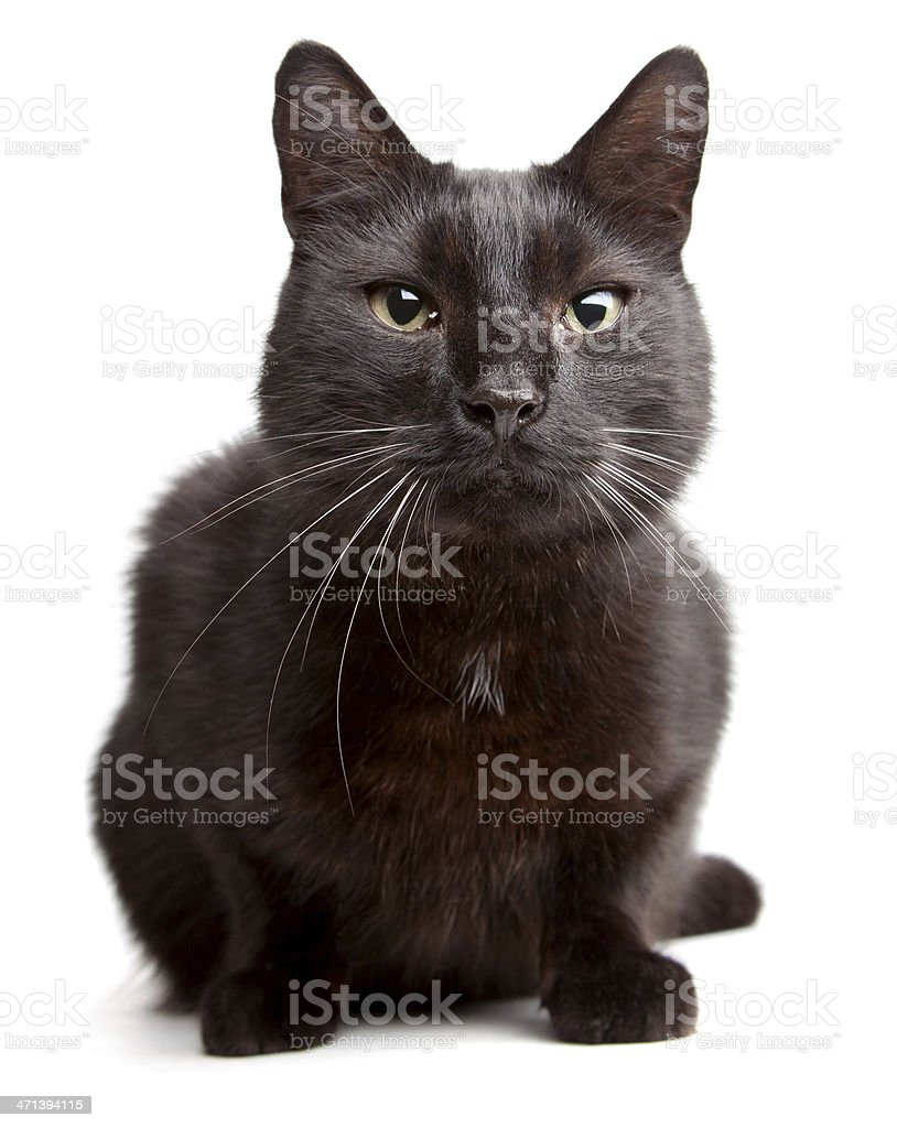 Black cat on  a white backgroound stock photo