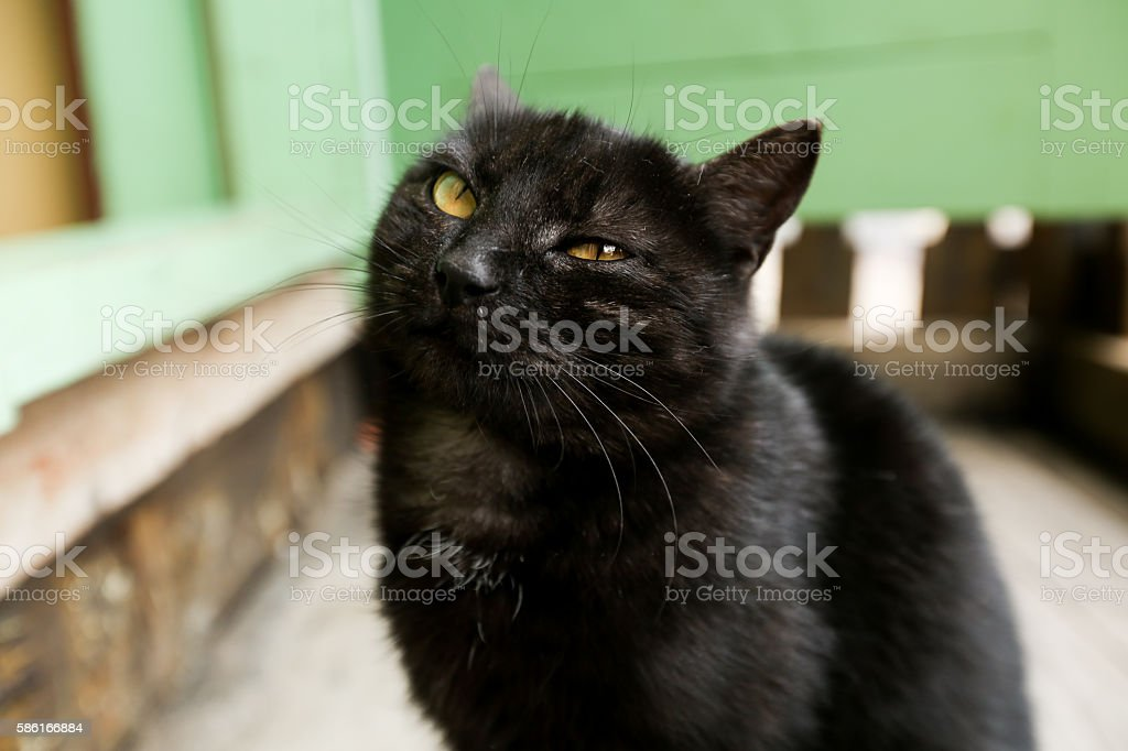 black cat on a  wooden teracce stock photo