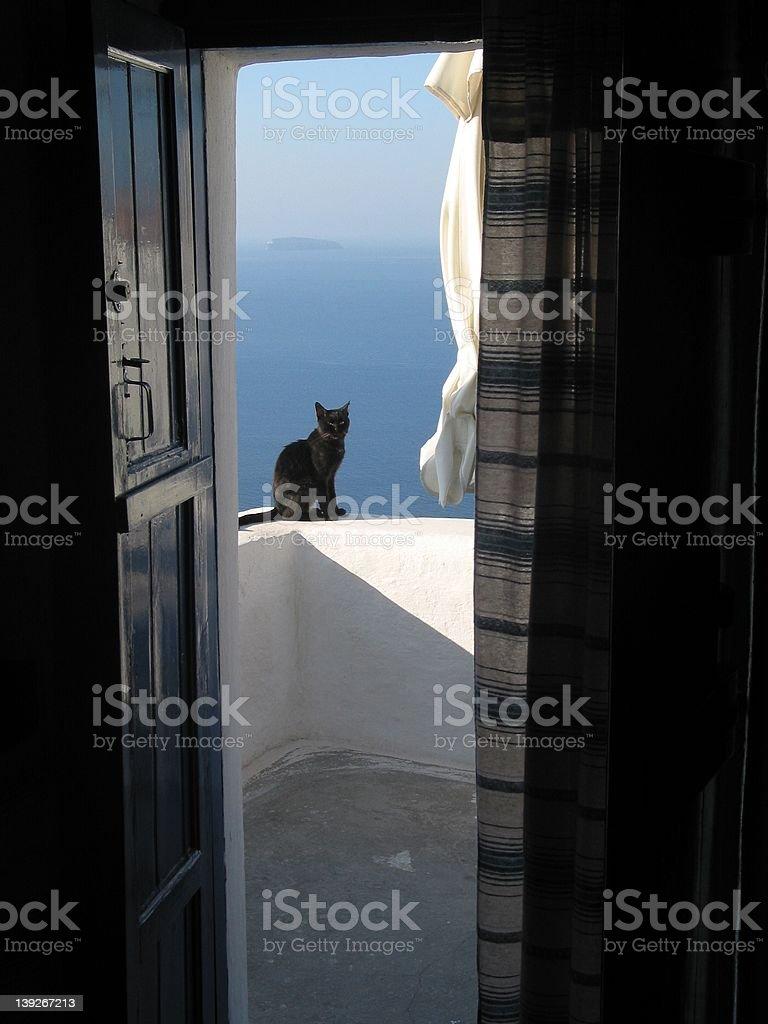 Black cat on balcony royalty-free stock photo