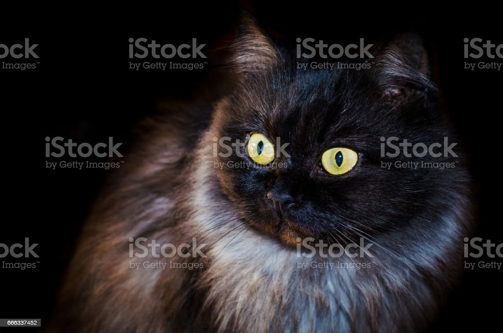 Black cat on black background with bright eyes stock photo