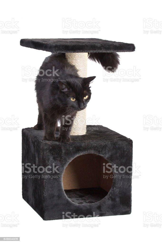 Black cat on cat scratcher stock photo