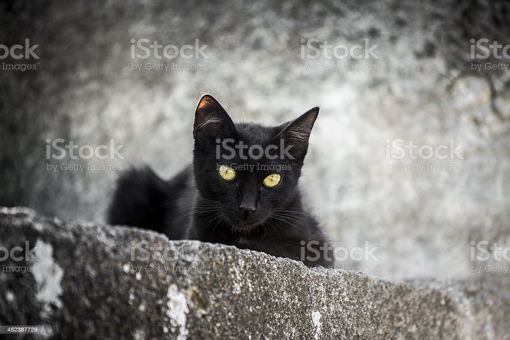 Black cat on concrete wall staring at camera stock photo