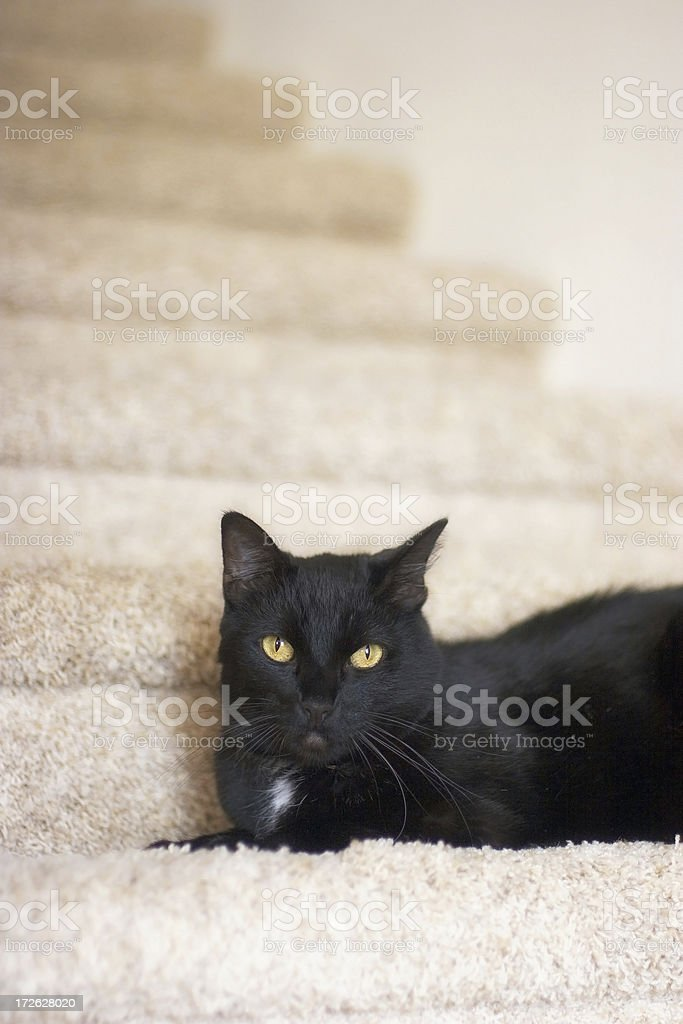 Black Cat on Stairs royalty-free stock photo