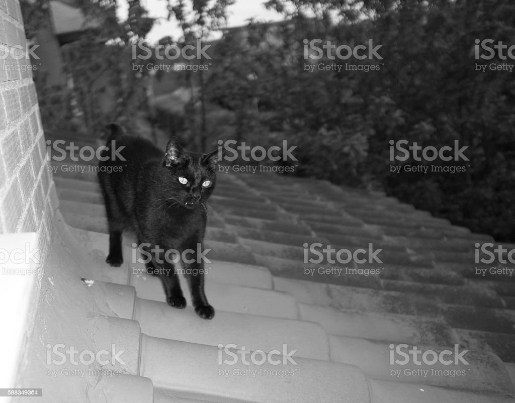 Black cat on the roof (black and white shot) stock photo