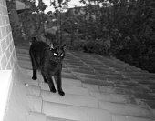 Black cat on the roof (black and white shot)