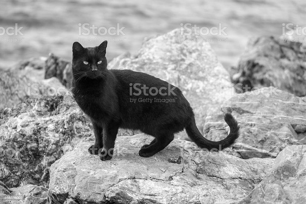 Black cat on the stone stock photo