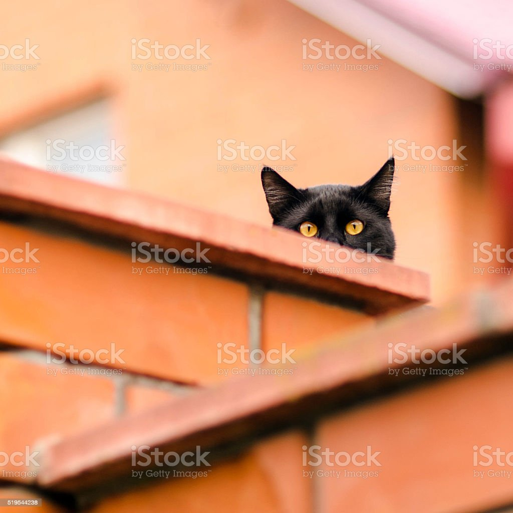 black cat peeking out from behind the wall stock photo