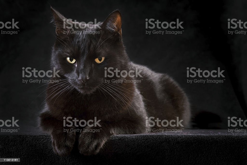 Black cat perched on a raised black surface stock photo