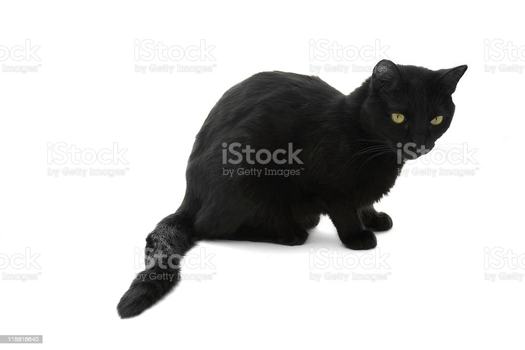 Black cat royalty-free stock photo