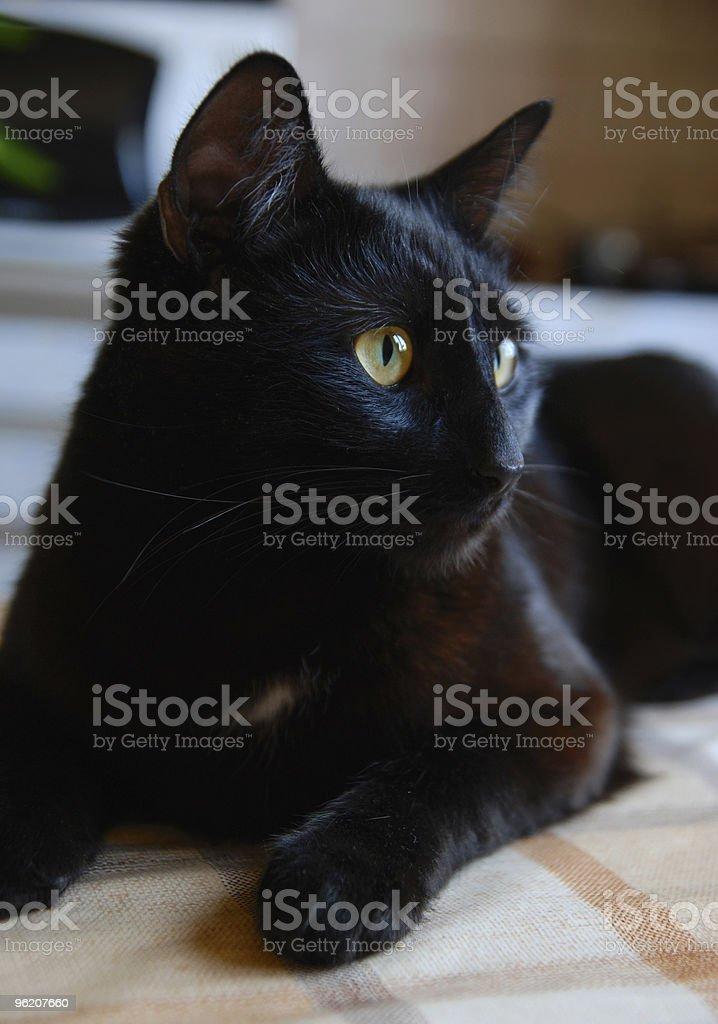 Gato preto foto de stock royalty-free