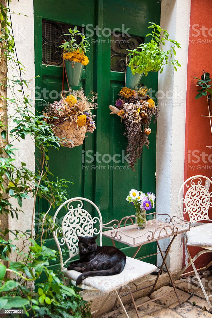 Black cat relaxed on chair surrounded by flowers stock photo