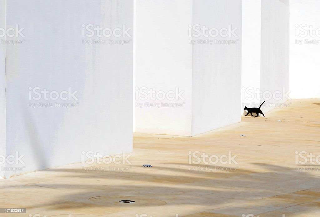 Black Cat Running stock photo