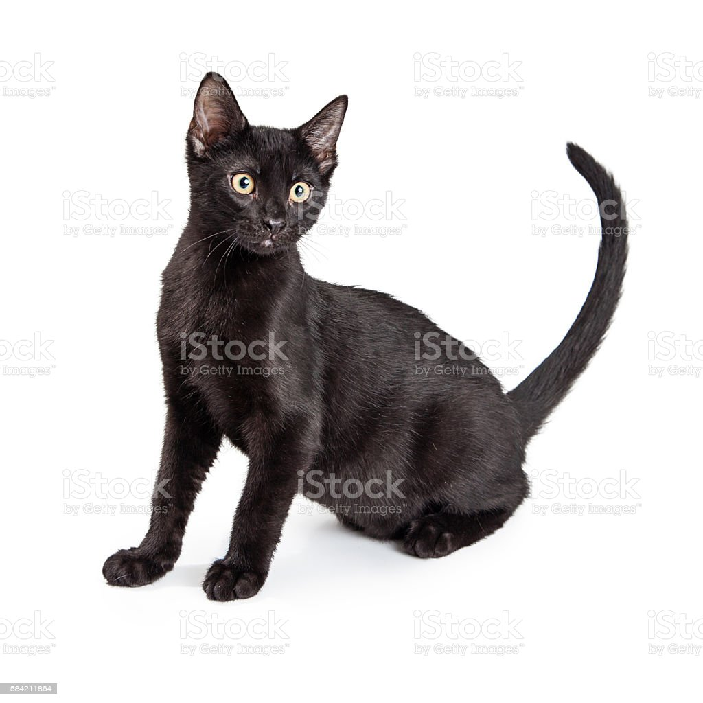 Black Cat Side View stock photo