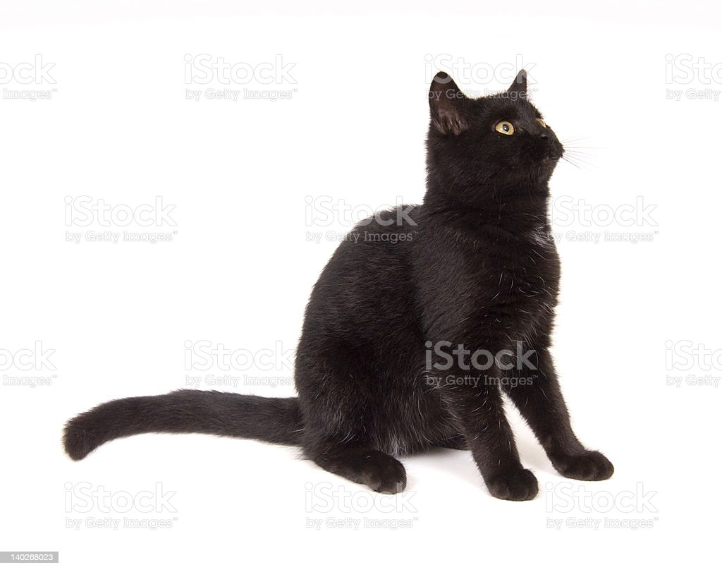 black cat sitting down looking to the right royalty-free stock photo