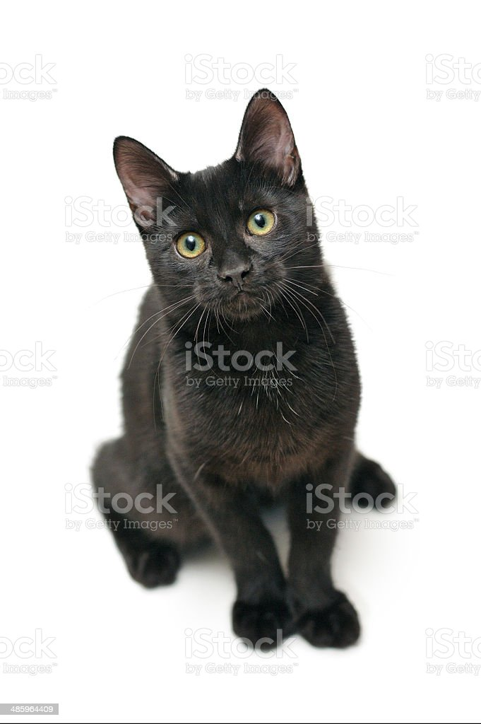 Black cat sitting on a white background stock photo