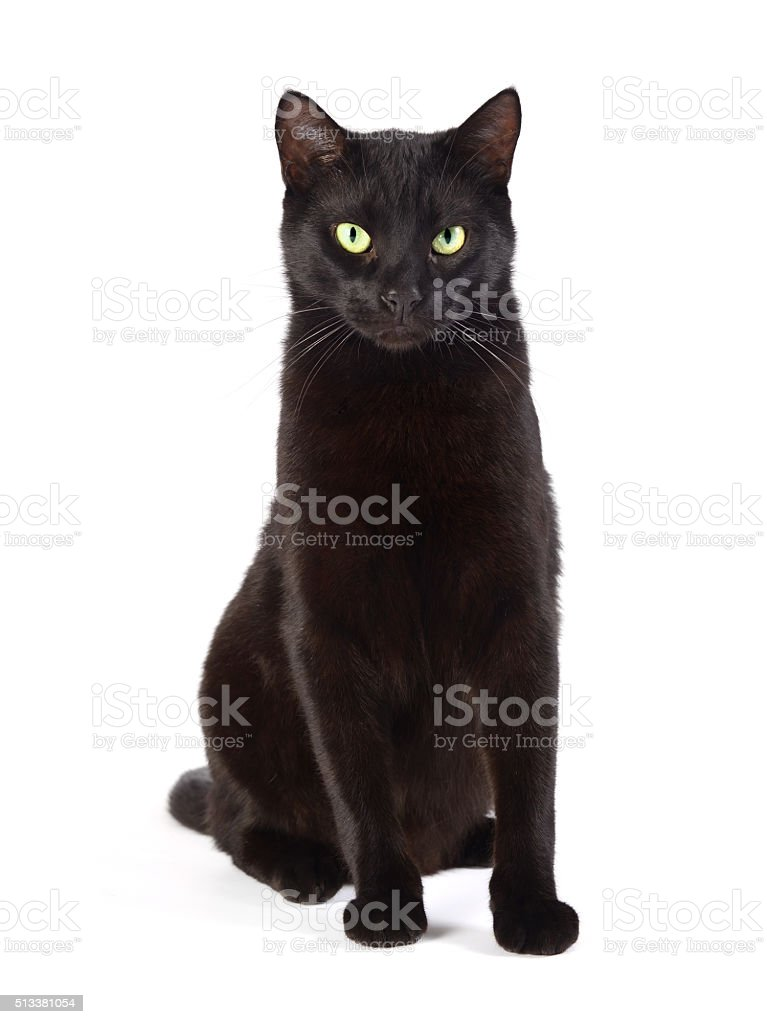 Black cat sitting stock photo