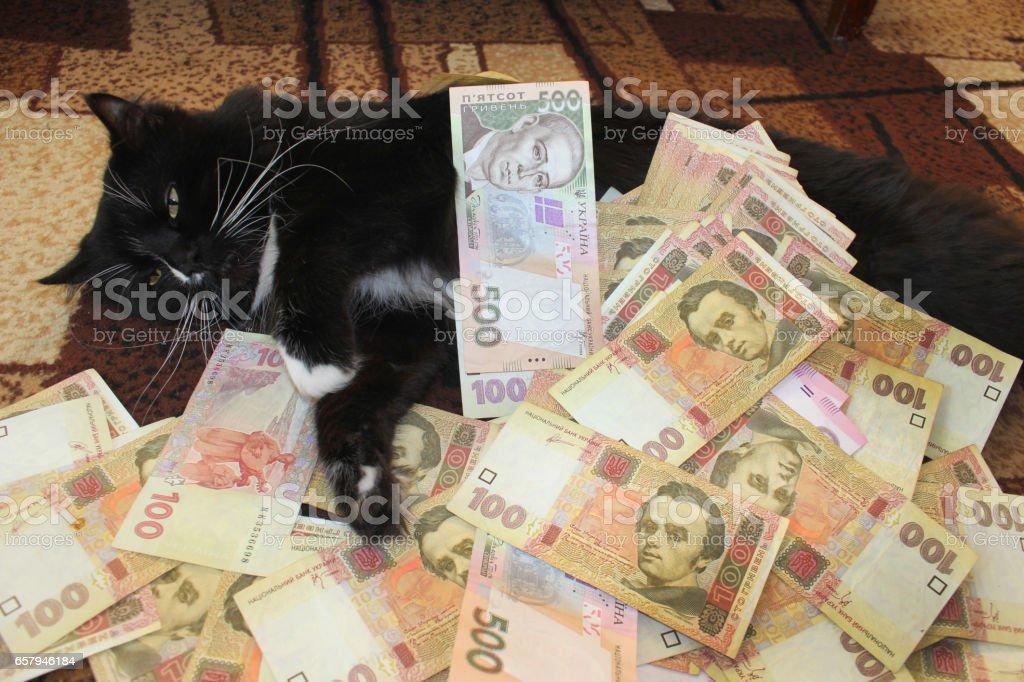 black cat sleeps on the carpet with Ukrainian money stock photo