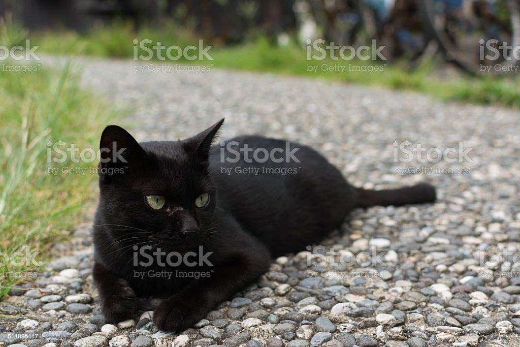 Black cat squatting on the floor. stock photo