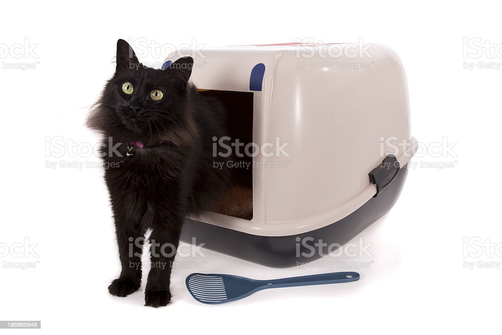Black cat using a closed litter box isolated on white stock photo