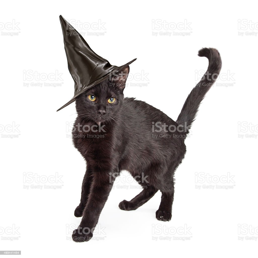 Black Cat Wearing Halloween Witch Hat stock photo