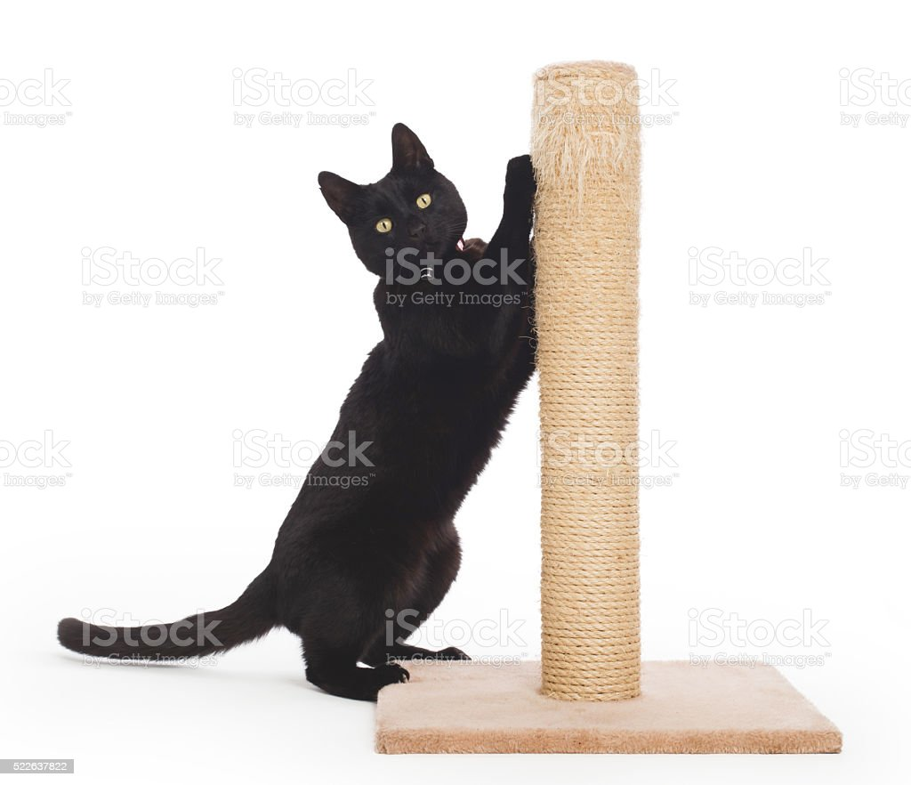 Black cat with a scratching post stock photo