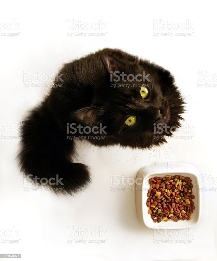 Black cat with food bowl stock photo