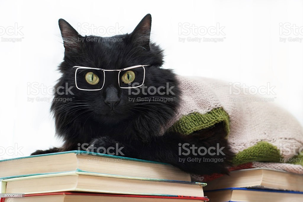 black cat with glasses lying on books stock photo