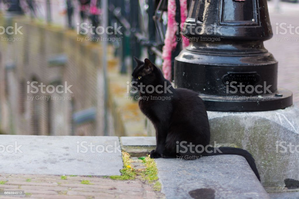 Black cat with long tail sits on the street stock photo
