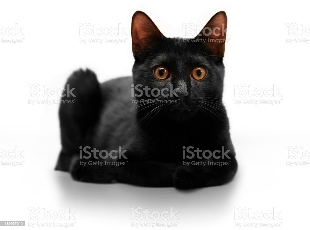 Black cat with orange eyes and a startled expression royalty-free stock photo