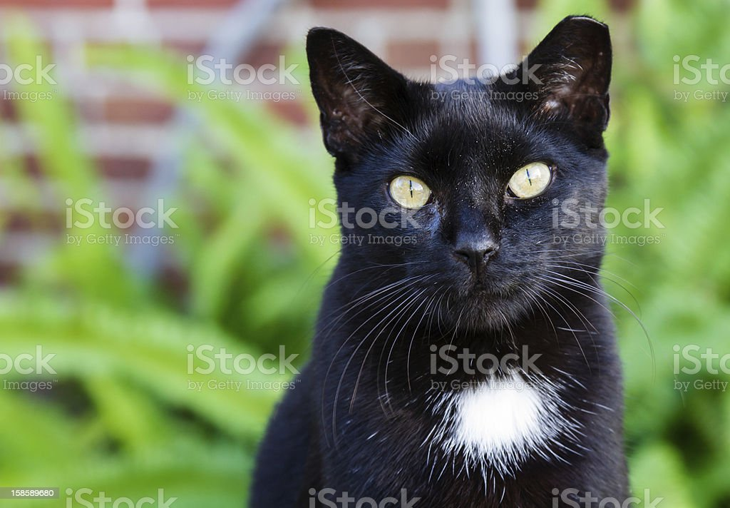 Black cat with striking yellow eyes. stock photo