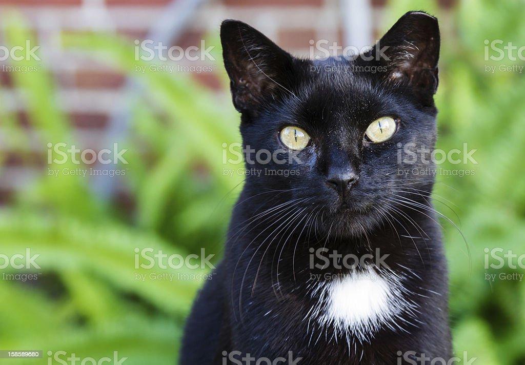 Black cat with striking yellow eyes. stock photo
