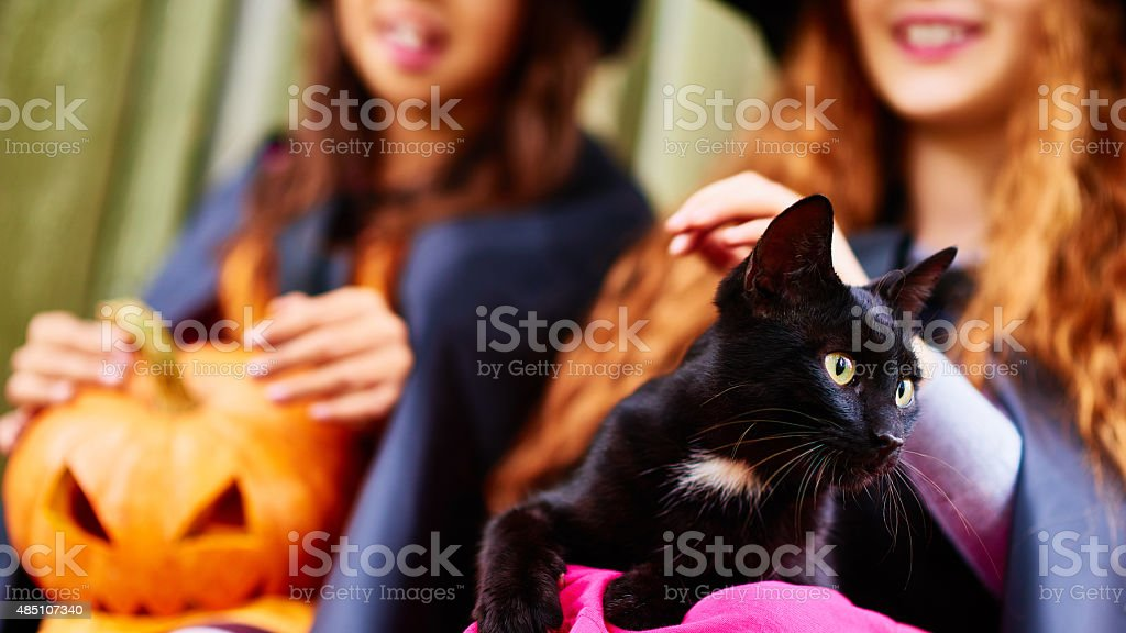 Black cat with white spot stock photo