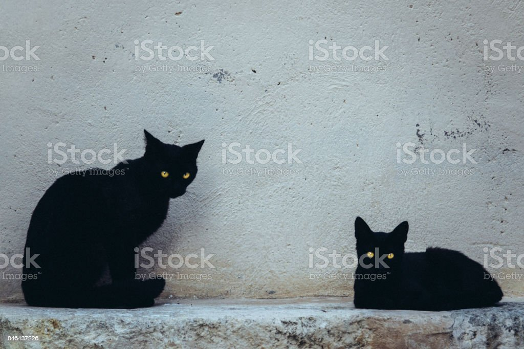 Black cats and yellow eyes stock photo
