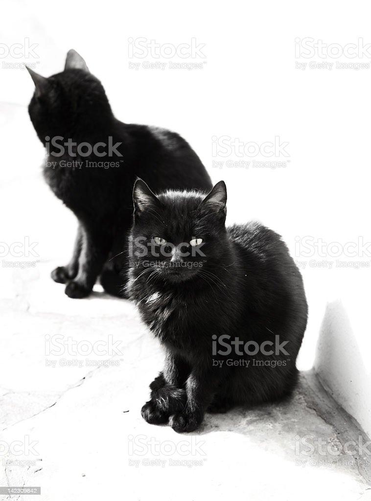 Black Cats royalty-free stock photo