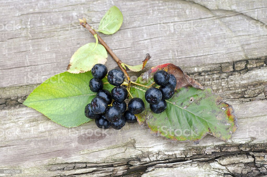 Black chokeberry (Aronia melanocarpa) berries with leafs on Wood stock photo