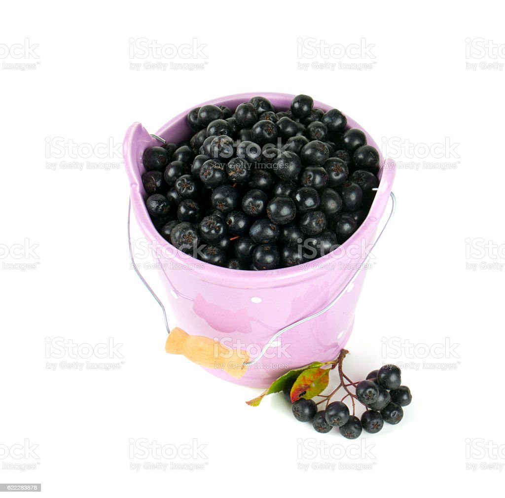 black chokeberry in a bucket stock photo