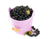 black chokeberry in a bucket