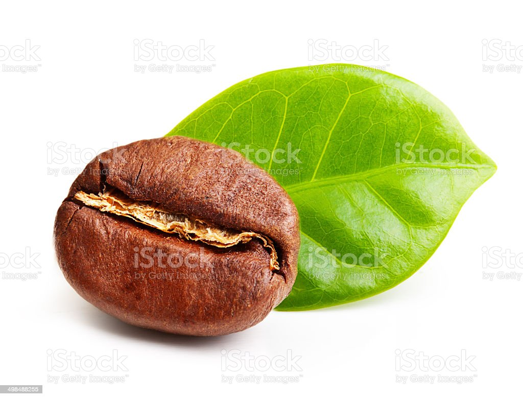 Black coffee bean, grain with leaf stock photo