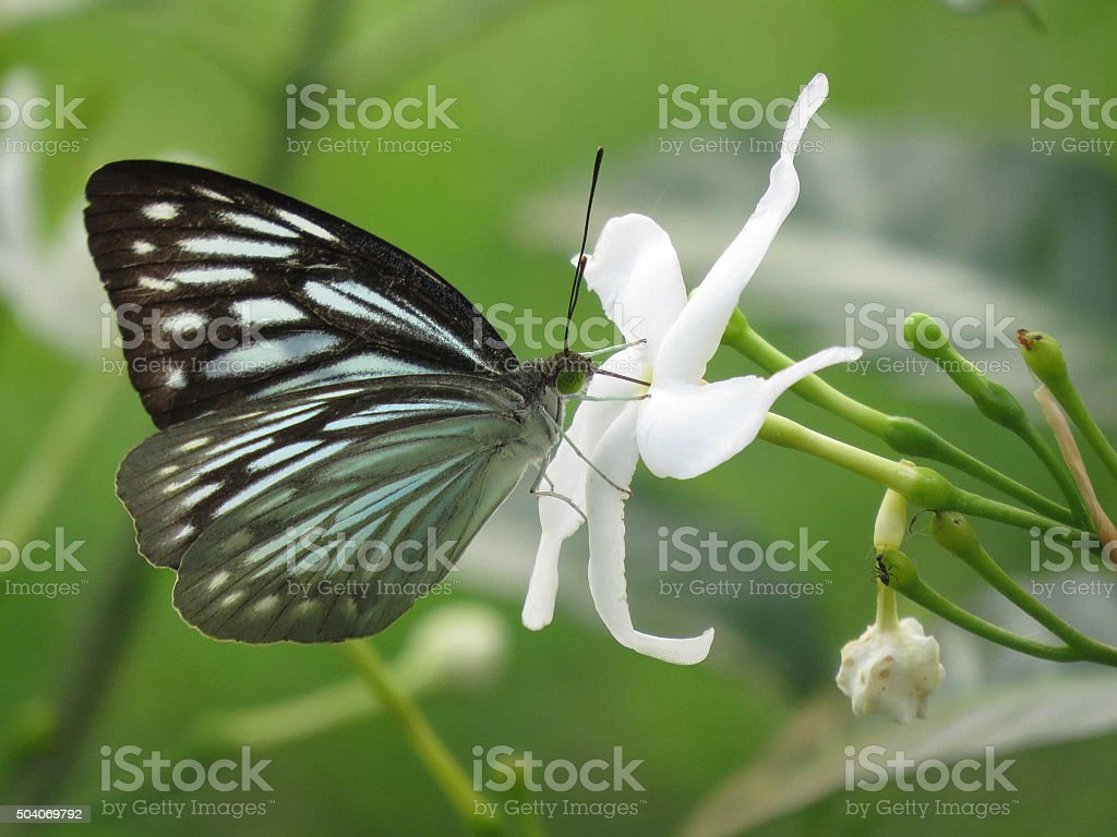 Black color butterfly on flower stock photo