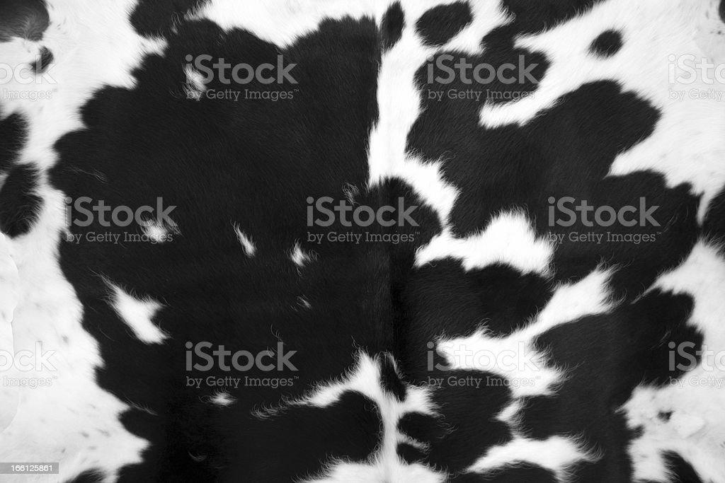 Black Cowhide stock photo