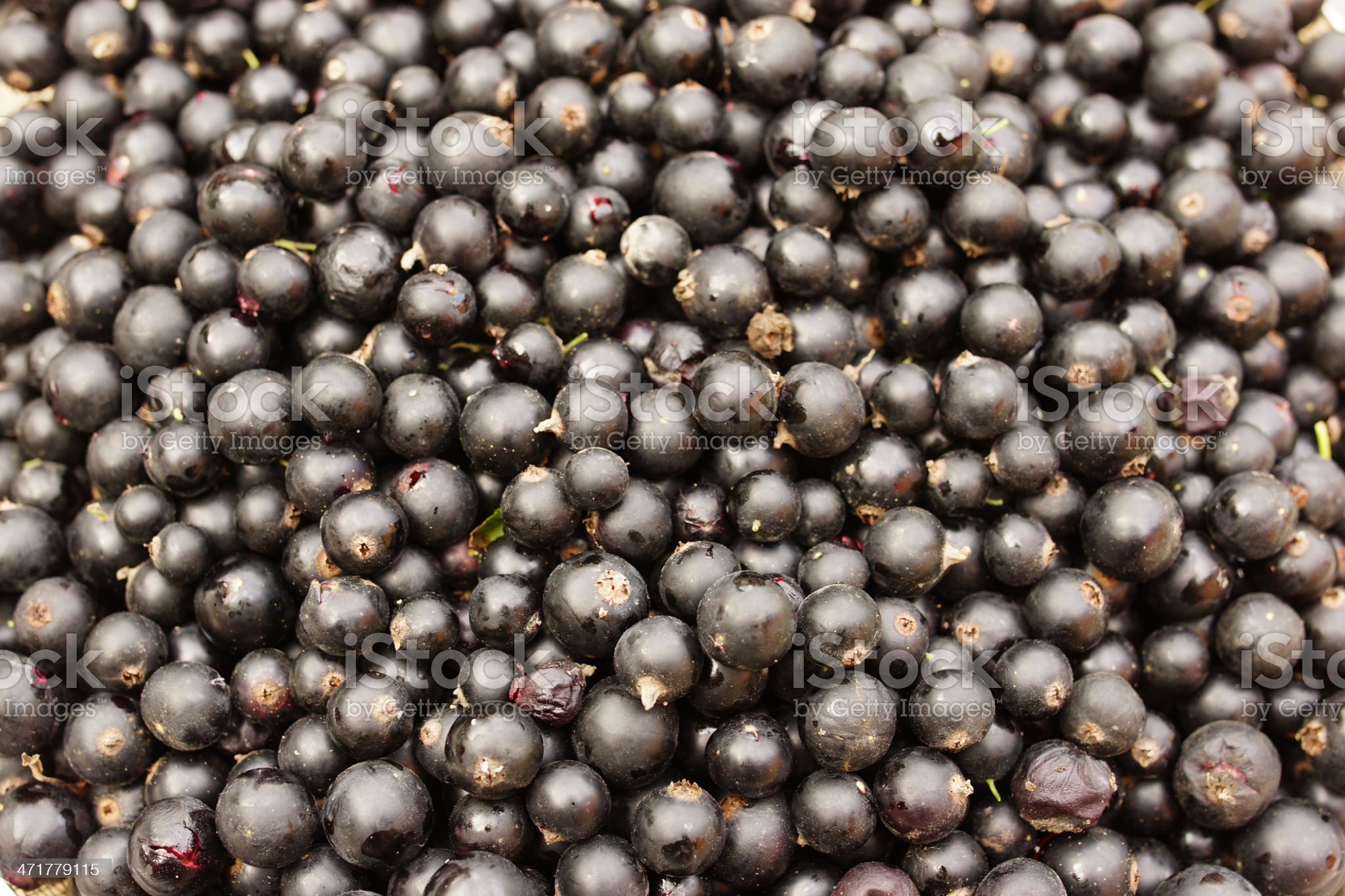 Black currant Background royalty-free stock photo