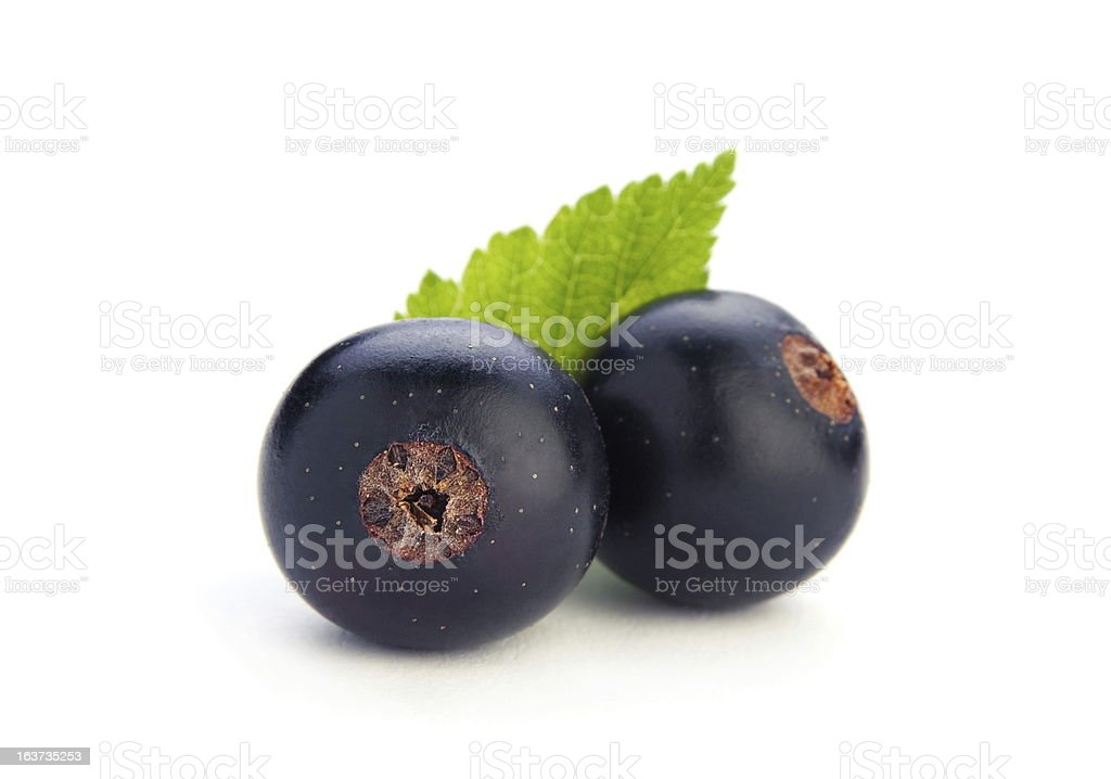 Black currant berry royalty-free stock photo