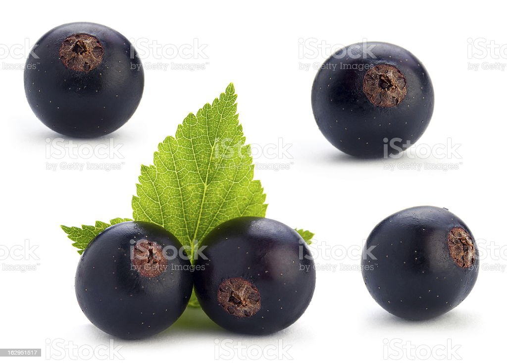Black currant berry set royalty-free stock photo