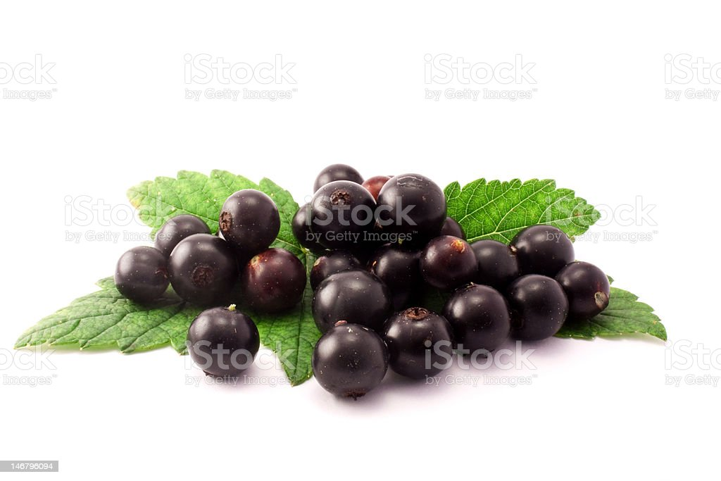 Black currant isolated on white background royalty-free stock photo
