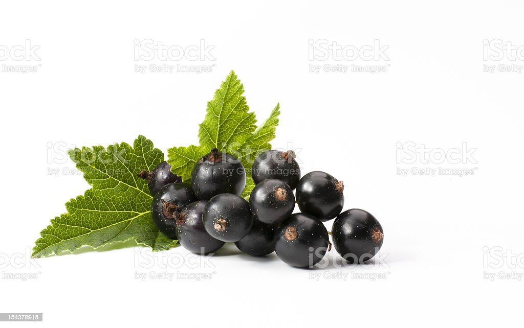 Black Currant Isolated On White Background stock photo