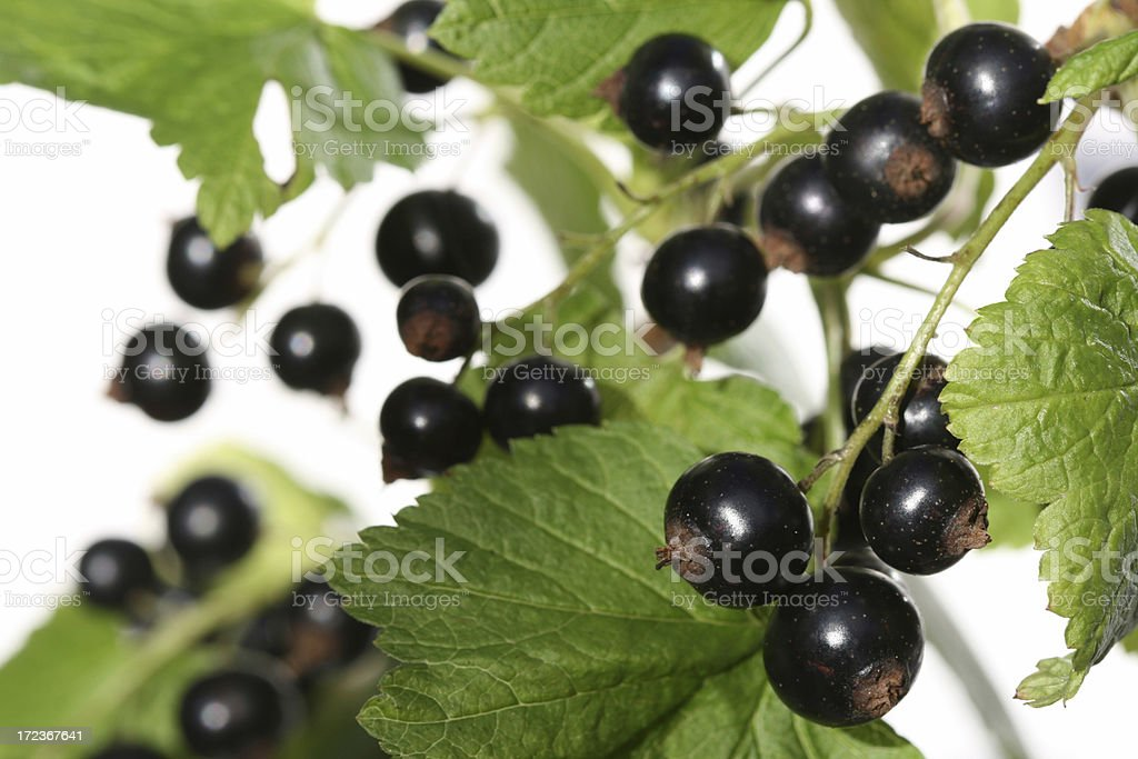 Black Currant on white royalty-free stock photo